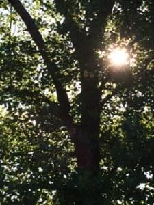 july 2014 tree