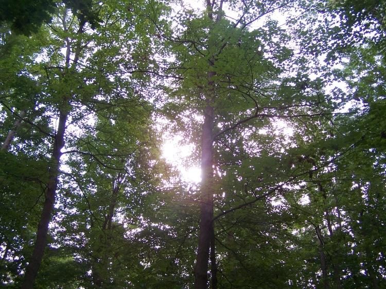 sun through trees door county