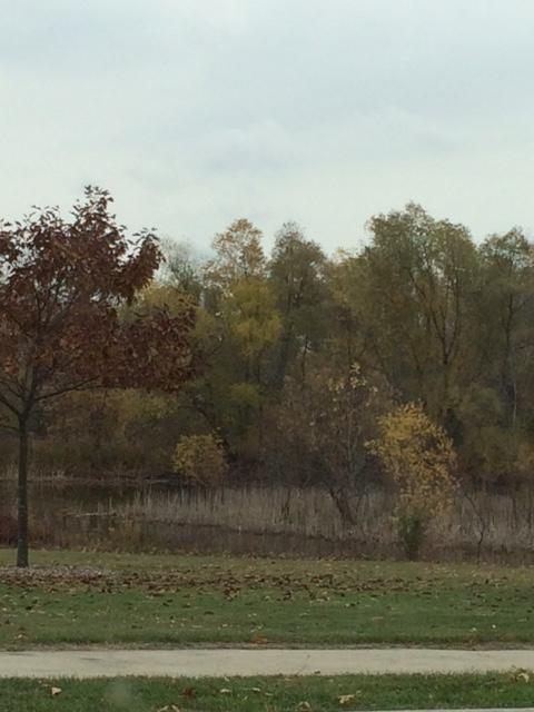 Fall 2015 pond