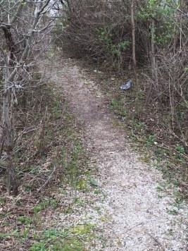 spring walk 4